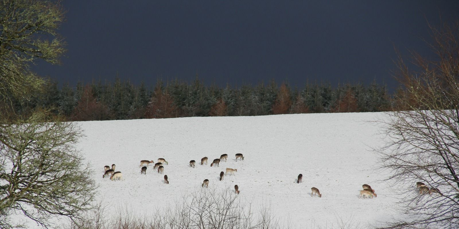deer in the snow banner